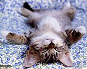 Avslappning-katt-vila